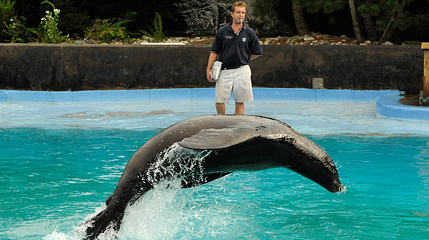 Free or pay what you wish zoos and aquariums in nyc for Fun shows to see in nyc