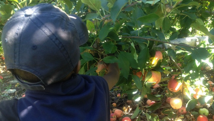 apple picking in new york - 9 best apple orchards