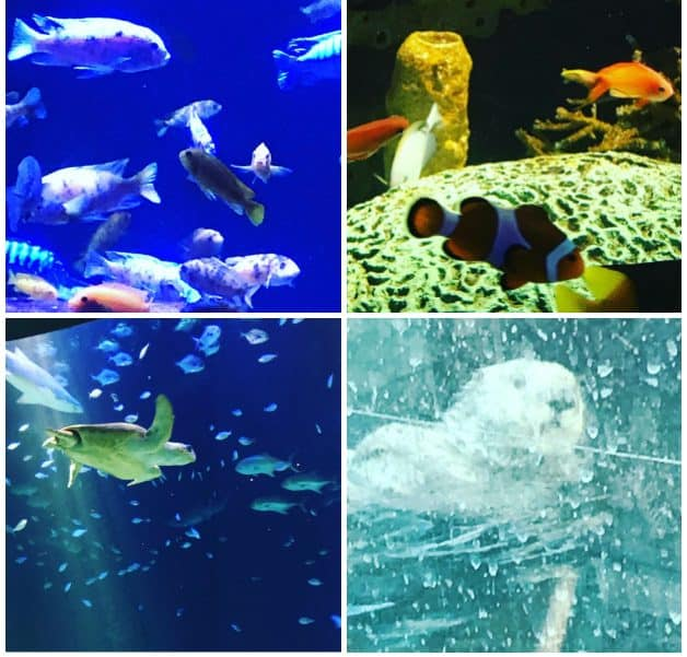 """A Look Inside the New York Aquarium at Coney Island - Slideshow video PLUS information regarding  """"pay what you wish"""" donation for entry"""